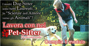 banner-catsitter2011-2